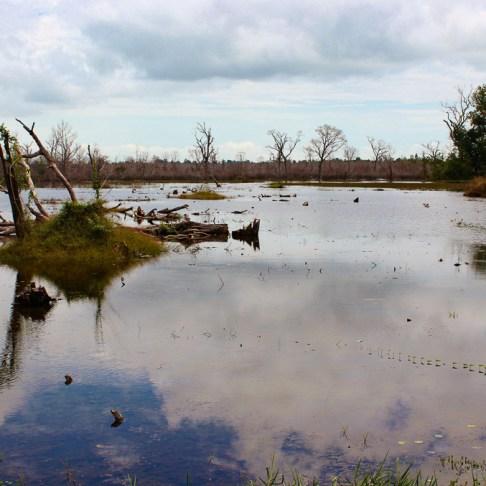 Swampy marsh outside Neak Pean temple at Angkor Park in Siem Reap, Cambodia