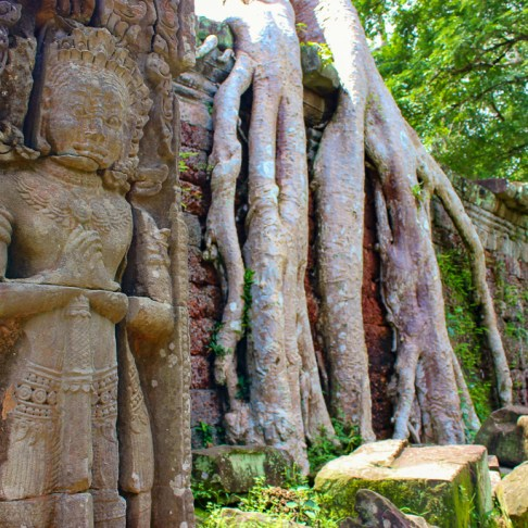 Preserved carving and tree roots at Preah Khan temple at Angkor Park in Siem Reap, Cambodia