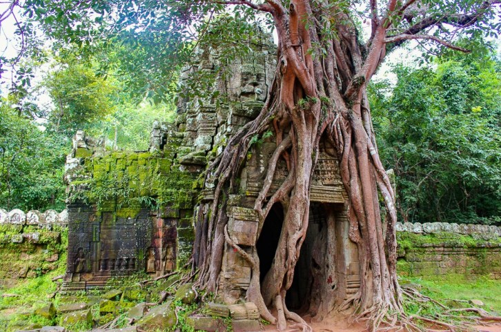 The Sacred Fig Tree grows over gate at Ta Som at Angkor Park in Siem Reap, Cambodia