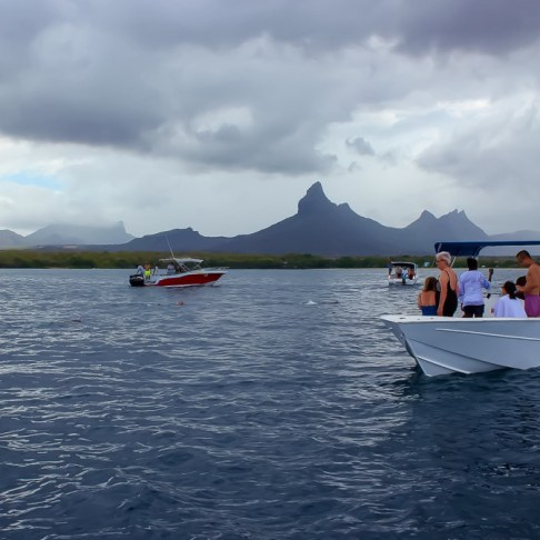 Dolphin watching from boats in Mauritius