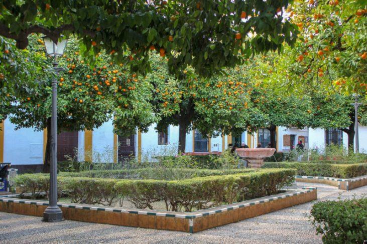 Discovering A garden in Barrio Santa Cruz, Seville Spain