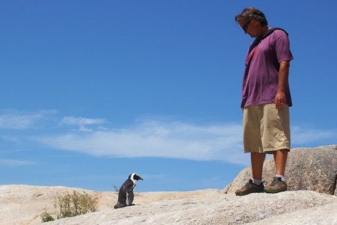 Lone penguin stares at man on South Boulders Beach in Simon's Town, South Africa