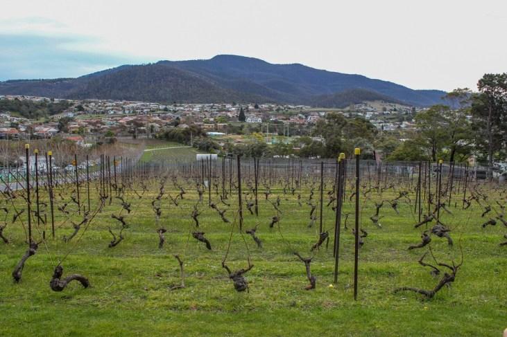Moorilla Estate Wines, Hobart, Tasmania, Australia