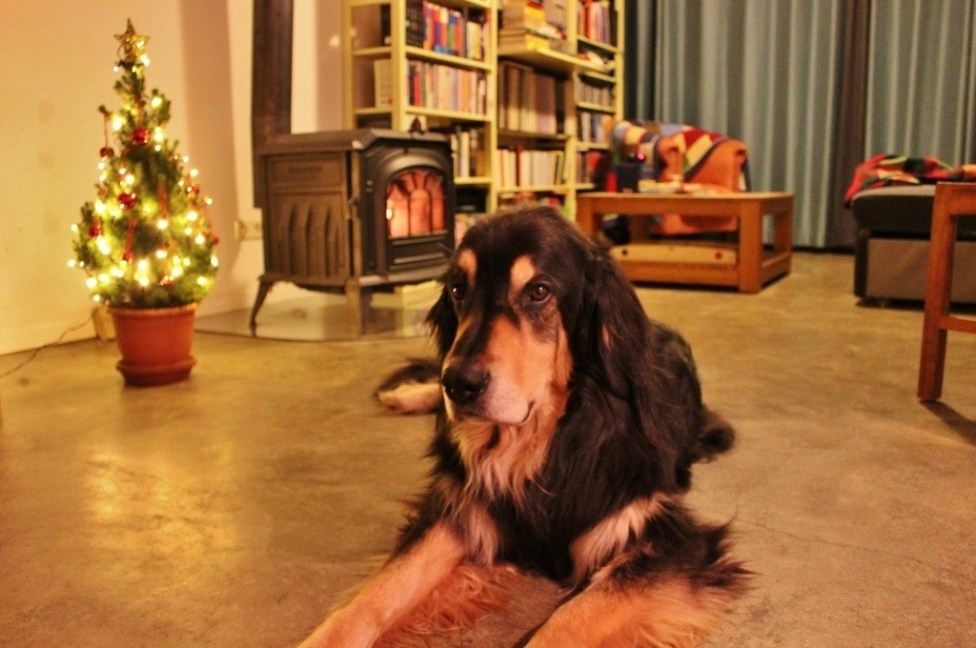 Housesitting for the holidays: Stories from around the world