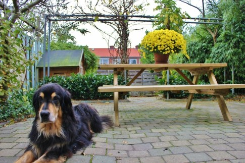 Two-Year Travel Budget Housesitting Dog in the Netherlands