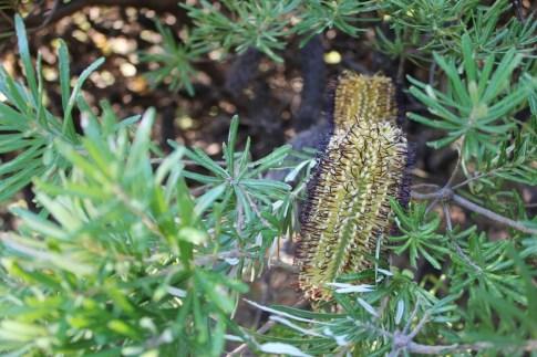 Wellington Botanical Garden Plants