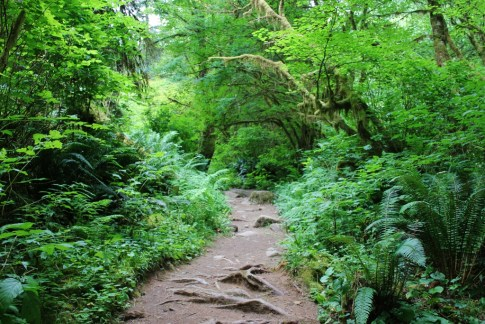 Sweet Creek Falls Trail, one of the hikes near Florence, Oregon