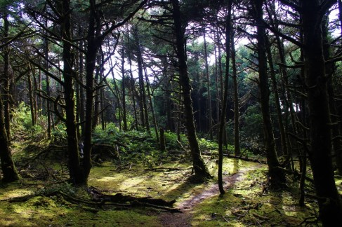 The Hobbit Beach Trail, one of the hike near Florence, Oregon