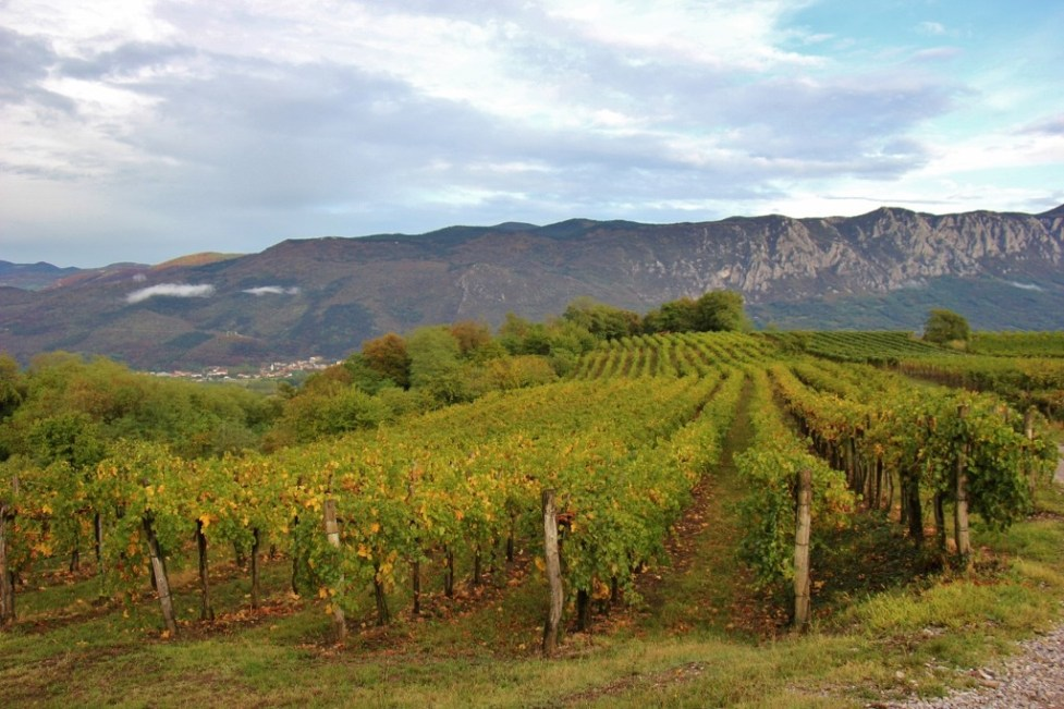 Vineyards at Hisa Vin Rondic in Slap, Slovenia