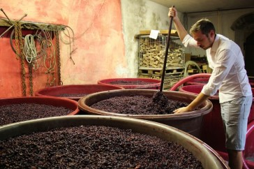 Method of traditionally fermenting cabernet grapes to make Slovenian Wine