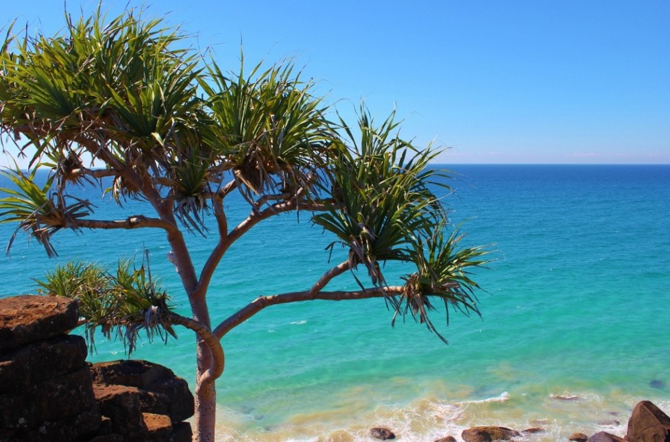 Palm tree and ocean on Gold Coast, Australia