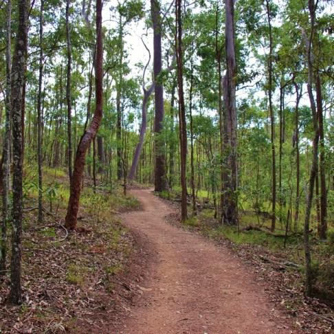 Curving dirt hiking trail at Mt. Coot-tha in Brisbane, Australia