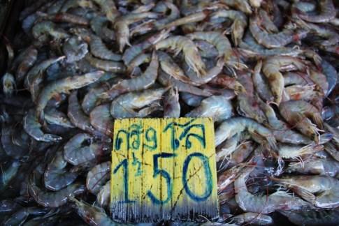 Fresh caught shrimp for sale at Khlong Toei Market in Bangkok, Thailand