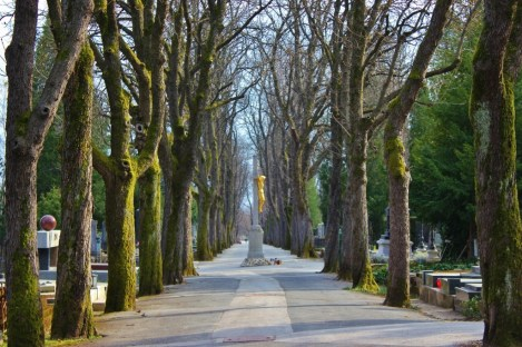 Tree-lined walkway at Mirogoj Cemetery in Zagreb, Croatia