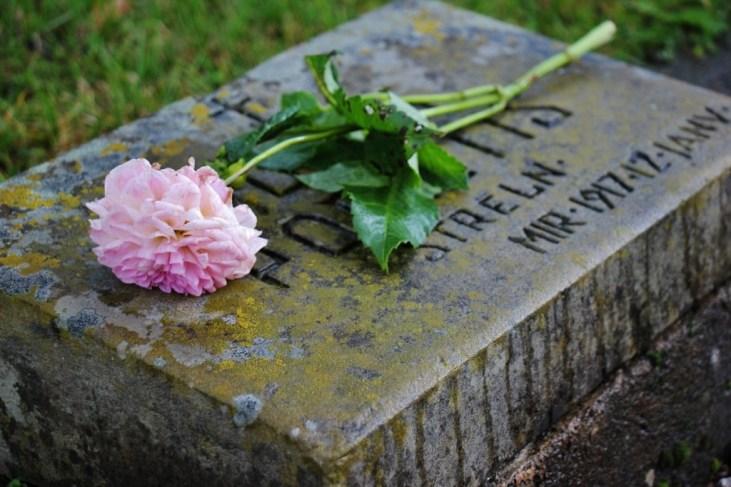Single flower on gravestone at Brethren Cemetery in Riga, Latvia