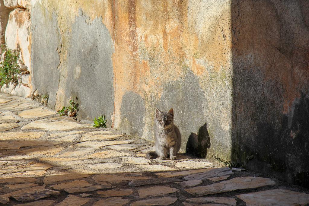 Kitten in street in Vela Rudina in Stari Grad on Hvar Island, Croatia