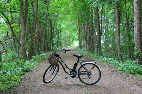 Dirt bike trail through forest in Colmar, France