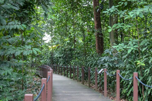 Wooden walkway through Rainforest at Botanical Gardens in Singapore