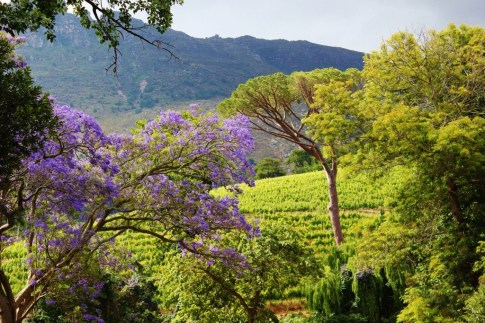 Eagle's Nest Wine Farm in Cape Town, South Africa