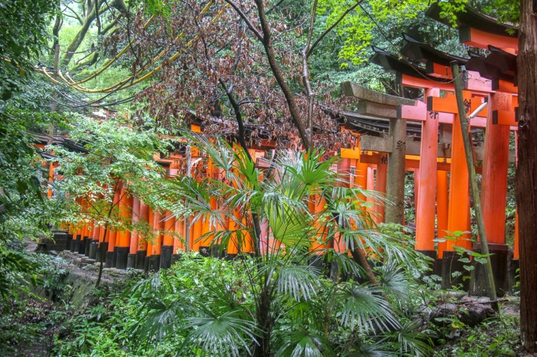 Vermilion Red Torii Gates line the paths at Fushimi Inari Taisha Shrine in Kyoto, Japan