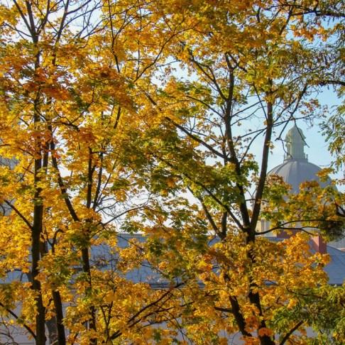 Fall Leafs, Lviv, Ukraine
