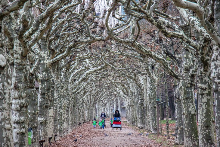 Tree-lined path along the Main River in Frankfurt, Germany