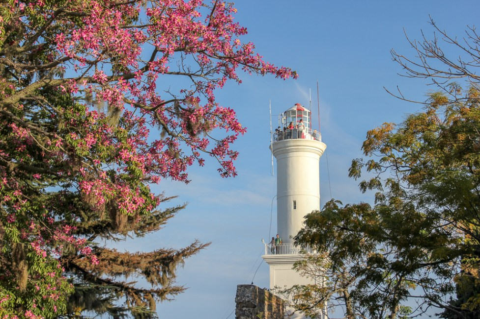 The Faro Lighthouse and pink blossoms in Colonia del Sacramento, Uruguay