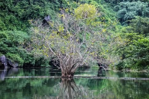 That Tree at Trang An, Ninh Binh Province, Vietnam