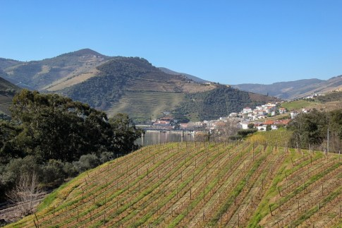 View of the many vineyards, Pinhao, Portugal,