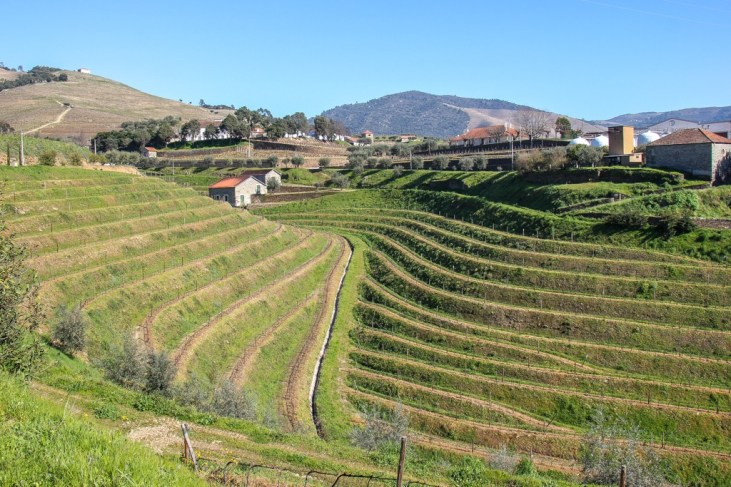 View of the terraced vineyards, Pinhao, Portugal