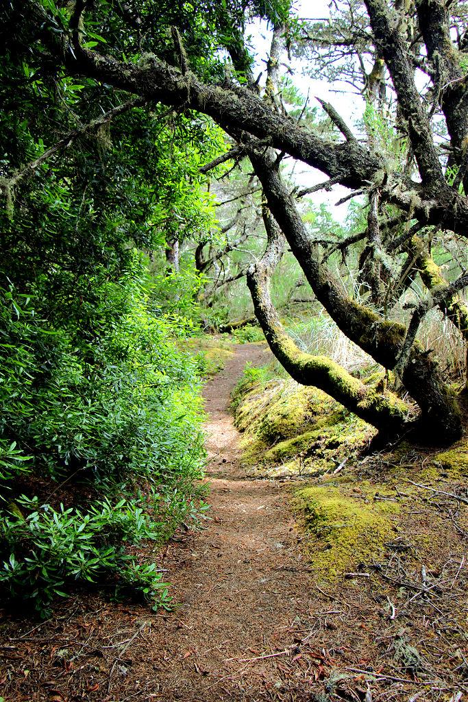 Hiking Path on Tahkenitch Creek Trail near Florence, Oregon