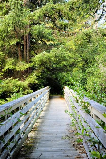 Bridge on Tahkenitch Creek Trail near Florence, OR