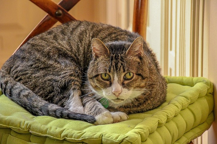 Nort, Cat Sit, Trusted Housesitters