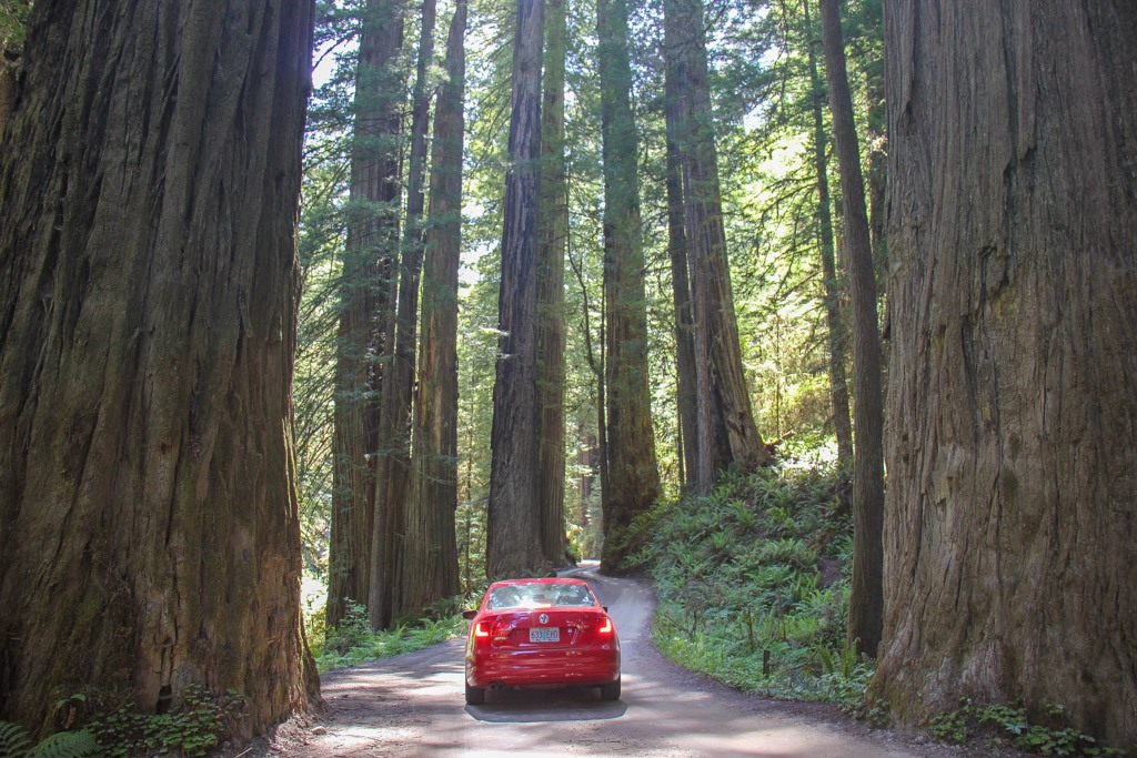 Driving amongst the Redwoods on Howland Hill Rd, Crescent City, California