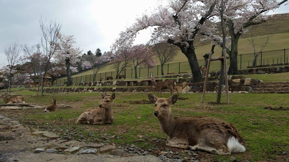 Japan: Nara's Famous Residents