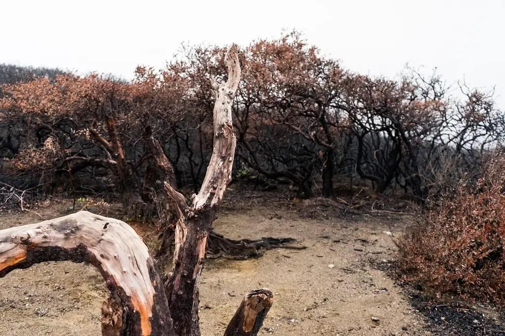 Ijen: dead trees