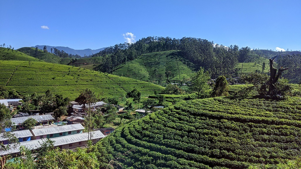 View of the tea plantations on the way to Nuwara Eliya