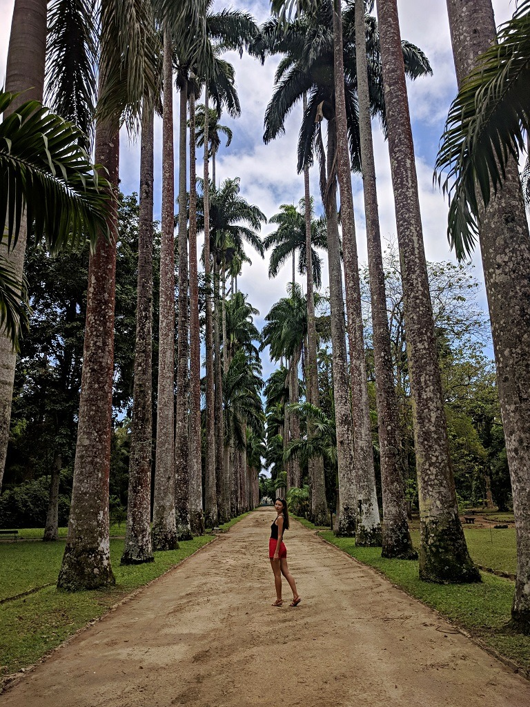 Avenue of Imperial Palm Trees