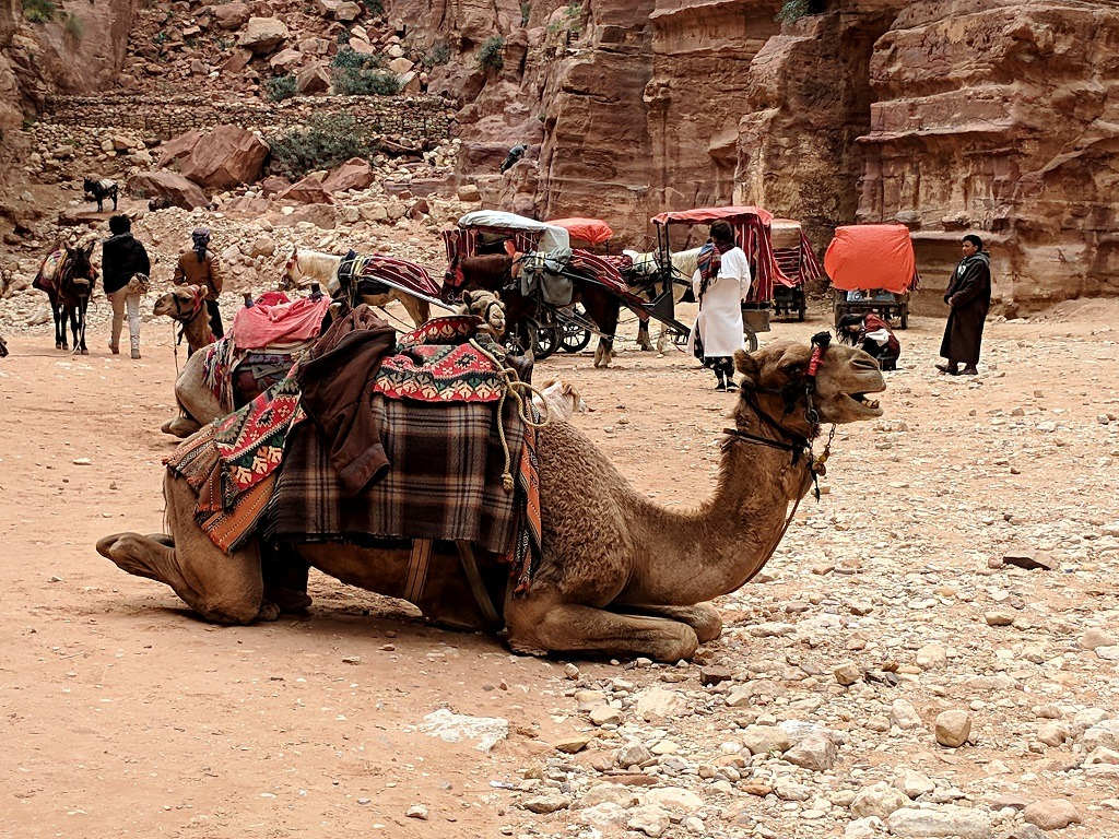 What To Expect From Petra: Camel