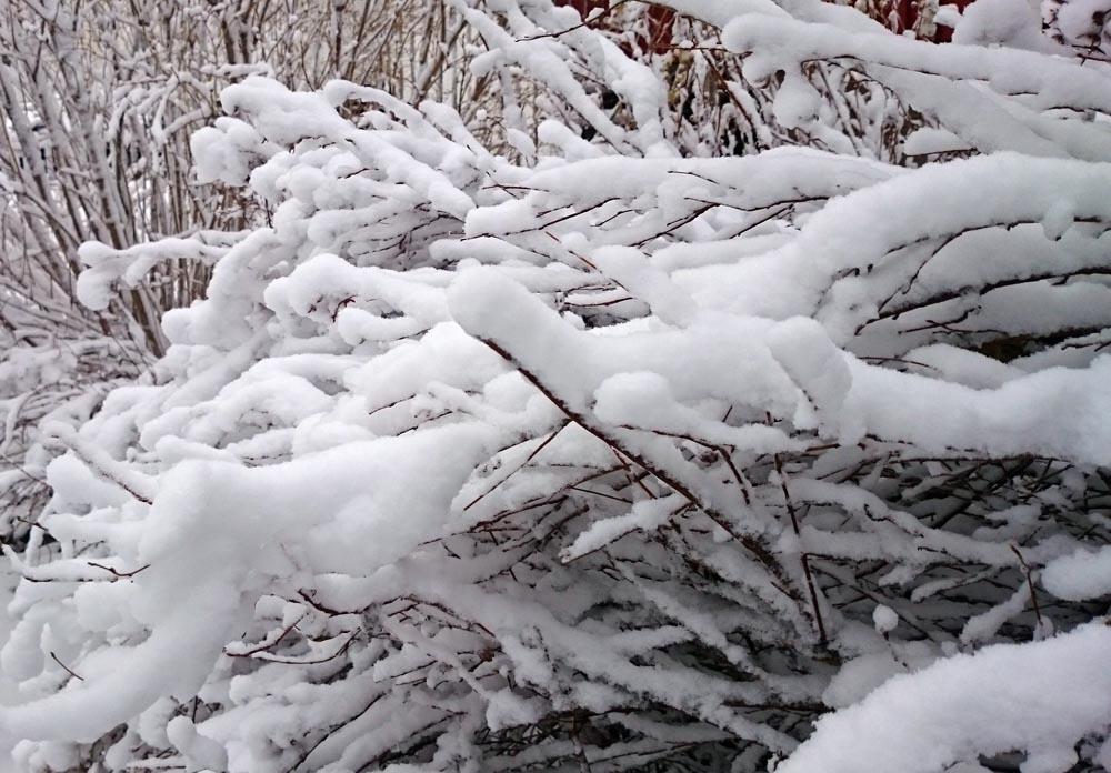 Ganska mycket snö har det kommit!