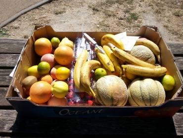 Fruits de récupération car non commercialisable