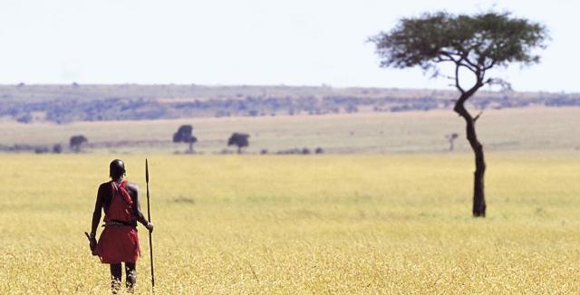 Masai na ngombe