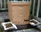 Bee hive with feeding pans