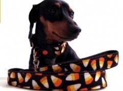 doggiecollar.jpg