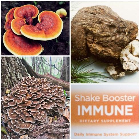 coronavirus, corona virus, reishi, maitake, poria, mushrooms, mycelium, immune boost, boost immunity
