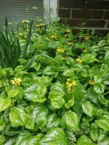 Our neighbour Francine's garden