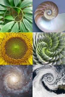Fibonacci Spirals in Nature
