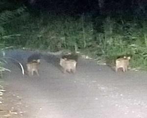 ウリ坊、鹿を見つける