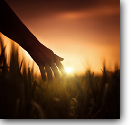 Cultivating a Soul: What Farming Can Teach You About Personal Growth