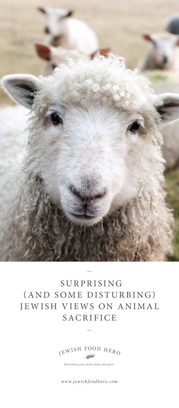 Surprising (and Some Disturbing) Jewish Views on Animal Sacrifice-1-Jewish Food Hero